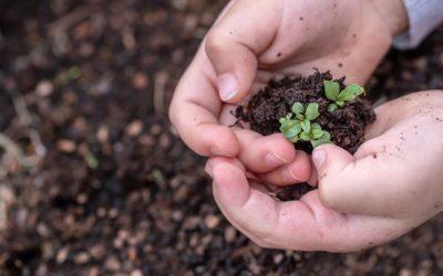 seedlings-3448883_1280